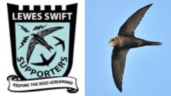 Celebrating Swift Awareness Week!