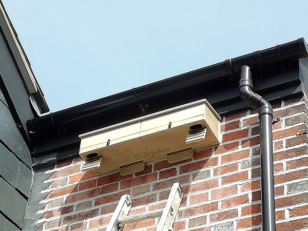 Want to install a swifts nest box?